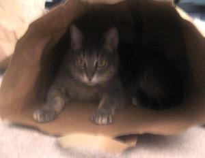 Kat's in the Bag